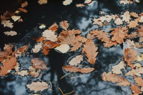 https://flic.kr/p/aDCMY3 | Autumn Reflections | Praktica MTL3 CZJ Flektogon 35mm f2.4 Fujifilm 200C Not particulary sharp, but good enough, I think.