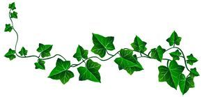 Vine Ivy Decoration Png Clipart Picture Ivy Tattoo Leaf Drawing Ivy