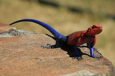 Types Best Pet Lizard Pet Lizard Exotic Types Of Exotic Pet - Majestic dragon lizard caught playing leaf guitar indonesia