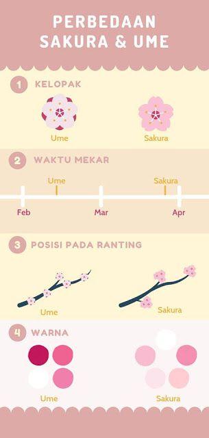 Perbedaan Bunga Sakura Dan Bunga Ume Sakura Bunga Cantik Wisata Jepang