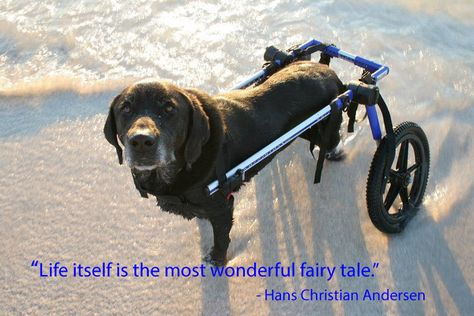 Pin By Walkin Pets By Handicappedpets Com On Dog Rescue Stories Animal Rescue Stories Disabled Dog Dogs