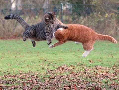 Losing your temper at the sandbox    Animals   Cats, Ninja