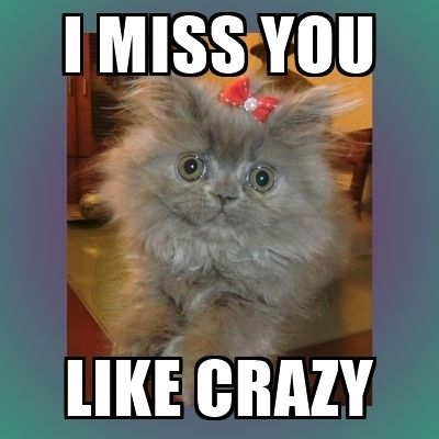 60 Cutest I Miss You Memes Of All Time Sayingimages Com Sorry Memes I Miss You Meme Missing You Memes