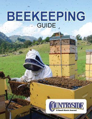 Raise Bees In Your Backyard Everything You Need To Know About Raising Honey Bees From Beehives For Beginners Bee Keeping Raising Bees Gardening For Beginners