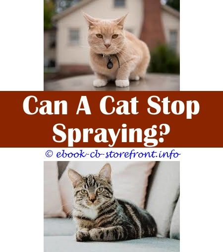 cleaning cat spray off walls