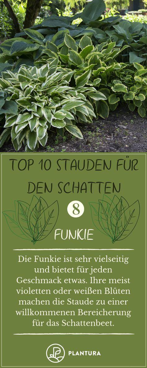 winterfeste Pflanzen Paket mit 10 Pflanzen für den Schatten Stauden