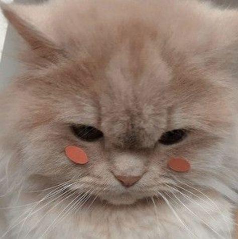 cat aesthetic #catlovers #cat #aesthetic #tumblr #cute #brown #love #sweet #pink #bts