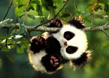 Cute Baby Animals Backgrounds Cute Baby Animals In The Rainforest Cute Little Animals Animals Funny Animal Pictures