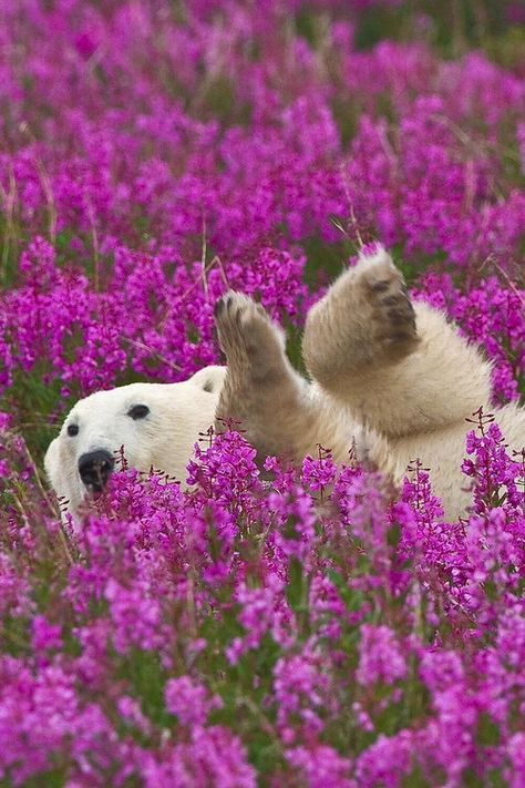 I could be this polar bear! She knows not only how to stop and smell the flowers but to also relax