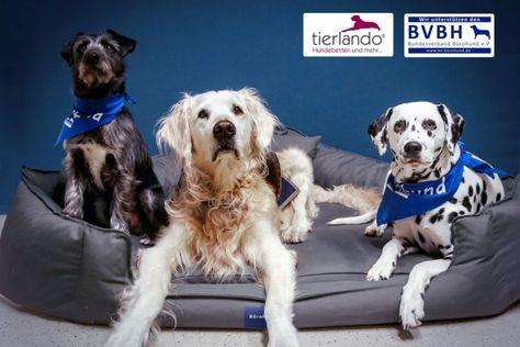Hund und Arbeit vereinen - der Bundesverband Bürohund e.V. und tierlando® helfen dabei