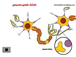 تشابك الخلايا العصبية Anatomie Et Biologie En Flash Svt College College