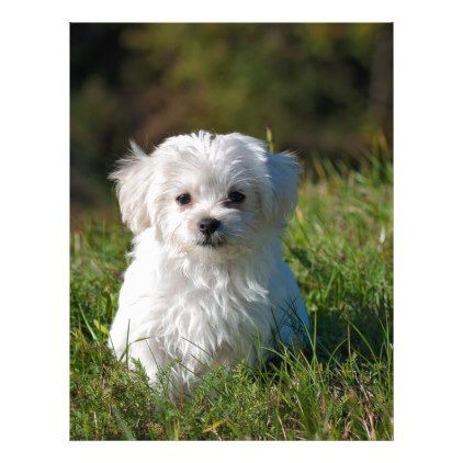 White Long Coated Dog On Grassland Zazzle Com Easy Tricks To