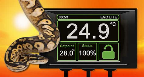 Know Your Reptile Thermostats Bearded Dragon Care Bearded Dragon Turtle Care