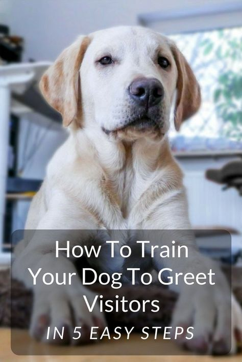 Dog Training 101 How To Train Your Dog Training Your Dog Dog