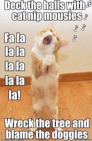 Look What I Pinned Cute Cats For Sale In Dubai Super Funny Animal Quotes Animal Jokes Funny Cat Pictures