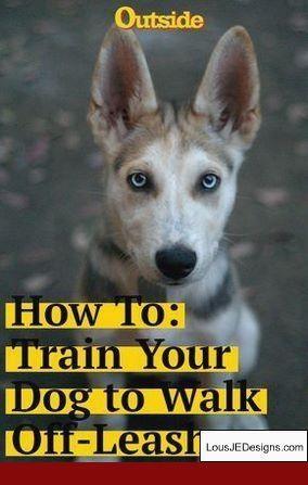 Why Do Dogs Bark Dog Barking Training Your Dog Dog Training