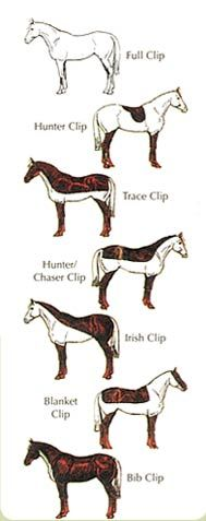 The most typical reason for clipping is to enable the horse to work comfortably and without undue sweating during the winter months when their coats grow naturally thicker. The clipped horse will be denied his natural protection from winter weather, and will need to be provided with additional protection in the form of both stable and waterproof outdoor rugs, ideally with suitable shelter facilities in his paddock.