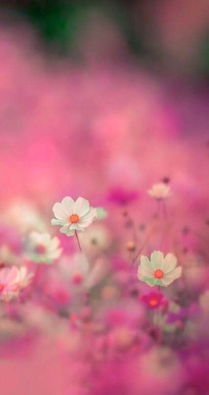 New Flowers Garden Pink Simple Ideas Flowers Photography Beautiful Flowers Wallpapers Flower Backgrounds