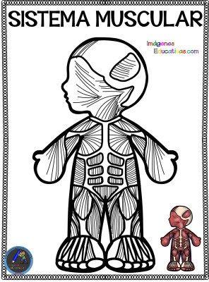 Cuaderno Para Colorear El Cuerpo Humano 11 Aparatos Del Cuerpo Humano Cuerpo Humano El Cuerpo Humano Infantil