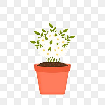 A Beautiful White Jasmine Flower Plant Houseplant Home Plant Png And Vector With Transparent Background For Free Download In 2021 White Jasmine Flower Watercolor Flower Background Pink Watercolor Flower