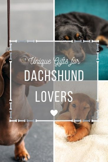 Need A Gift For A Crazy Wiener Dog Lover Here Are Some Unique