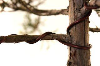 bonsai wiring: how to