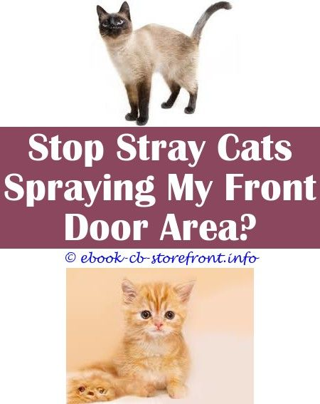 15 Irresistible Will Female Cat Stop Spraying If Spayed De 8 Admirable