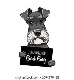 Cartoon Schnauzer Dog High Res Stock Images Shutterstock In 2021 Schnauzer Dogs Schnauzer Dog Images
