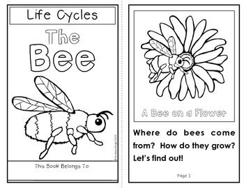 This Download Provides Materials To Help Support Your Science Instruction Of Life Cycles Insects And Or Bees The Set Inc Bee Activities Bee Book Life Cycles