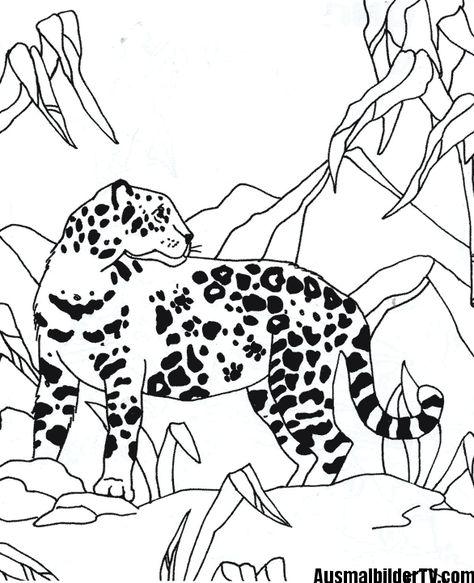 ausmalbild jaguar tier  jaguar tier ausmalen