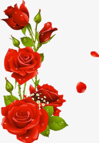 Millions Of Png Images Backgrounds And Vectors For Free Download Pngtree Flower Backgrounds Red Roses Photoshop Backgrounds Free