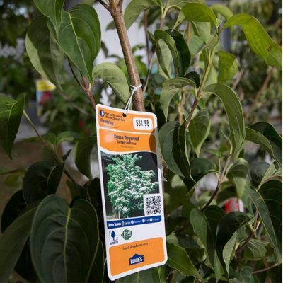 Lowes Plant Return Policy 2019 Tips