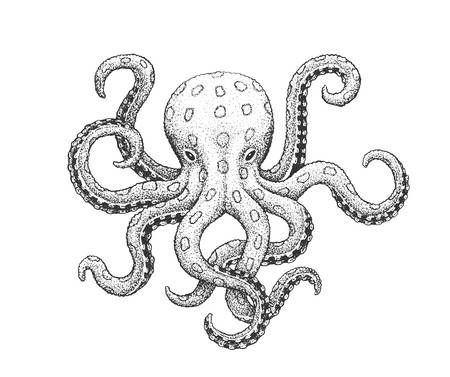 Blue Ringed Octopus Classic Drawn Ink Illustration Isolated Ink Illustrations Octopus Drawing Octopus Sketch