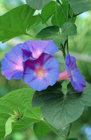 Flower Essences Coryelle Kramer Flower Essences Bach Flower Remedies Healing Flowers