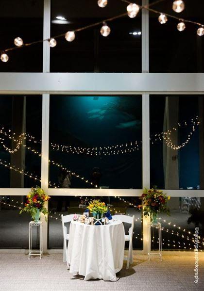 Virginia Aquarium Marine Science Center Virginia Beach Va Party Venue Party Venues Virginia Beach Aquarium Aquarium Wedding