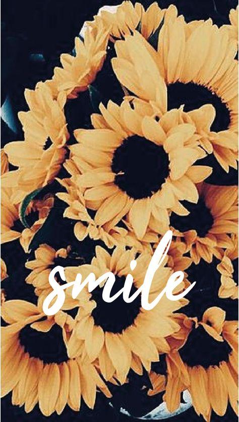 Papel de parede girassol - Smile