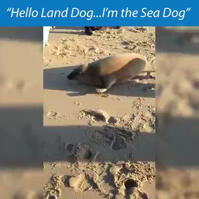 """Jmarie William on Twitter: """"Hello Land Dog.. I am the Sea Dog #dogs #DogsofTwittter #DogsMostWanted #seadog #sea… """""""