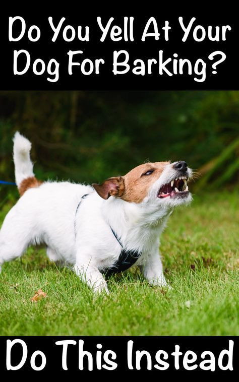 1 Way To Get Any Dog To Stop Barking And Listen In 2020 Dog Potty Training Dog Potty Dog Training