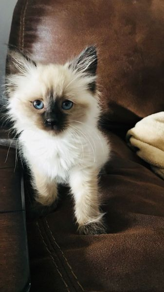 These Cute Cats Will Brighten Your Day Cats Are Incredible Companions Popular Cat Breeds Most Popular Cat Breeds Cute Cats