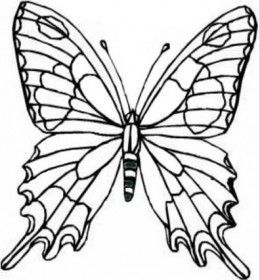 Colouring Butterfly Drawing
