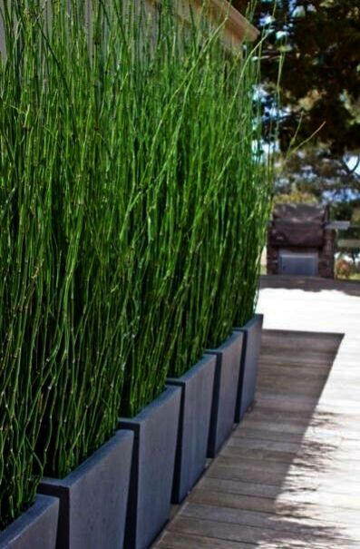 Garden Landscaping Ideas Images Their Garden Landscaping Ideas Australia Either Garden Landscaping Adelaide Privacy Plants Pond Plants Backyard Landscaping