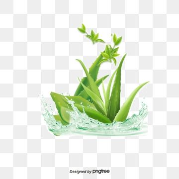 Vector Aloe Vera Aloe Vera Aloe Essential Png Transparent Clipart Image And Psd File For Free Download Flower Background Wallpaper Poster Background Design Aloe Vera