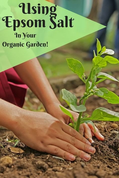How To Use Epsom Salt In Your Organic Garden In February You Can