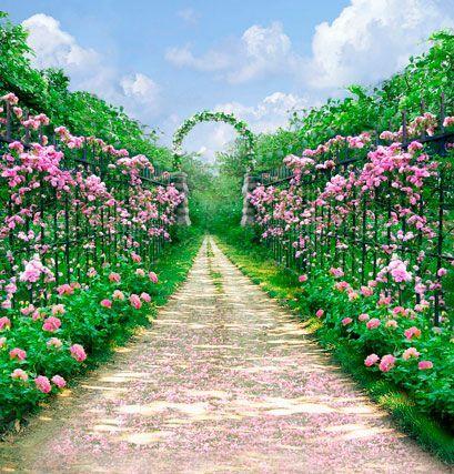 Cartoon Garden Digital Photography Backdrops Backdrops Backgrounds Photography Studio Background