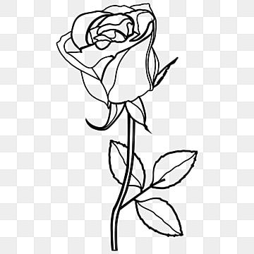 Rose Line Art Flower Continuous One Line Art Drawing Vector Minimalist Design Roses Clipart Outline Drawing Png And Vector With Transparent Background For Fr In 2021 Flower Line Drawings Rose Line