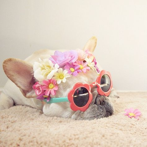 I M Ready For Spring Fashionable French Bulldog Cute Animals