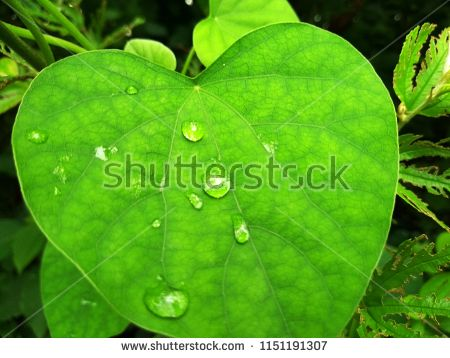 Find Green Leafs Wallpaper Stock Images In Hd And Millions Of Other Royalty Free Stock Photos Illustrations Stock Photos Wallpaper Royalty Free Stock Photos