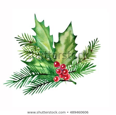 Christmas Design Element Watercolor With Holly Leaves Berries And