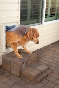Wall-inset doggy door: train your pooch to use a door that's on a different level.