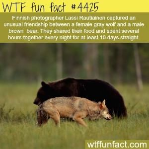 WTF Facts : funny, interesting & weird facts by Divonsir Borges